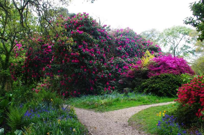 Furzey-Gardens-Lyndhurst-9
